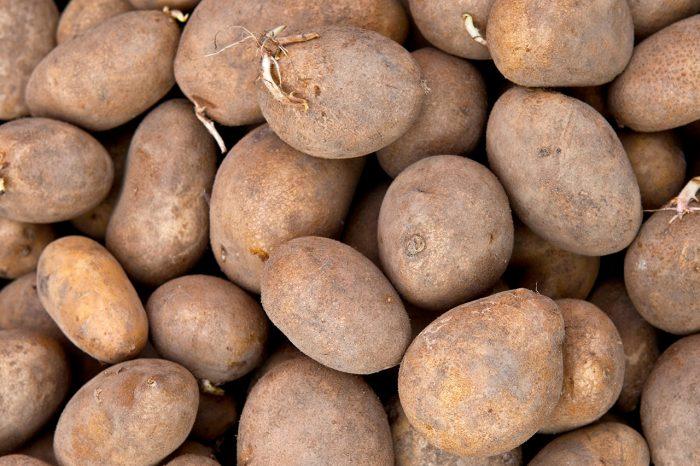 Обработка клубней картофеля от вредителей