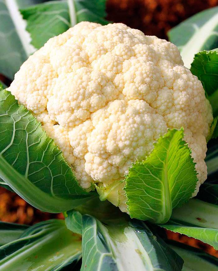 Дозаривание головок цветной капусты