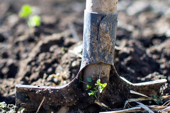 Морковь как удобрять землю