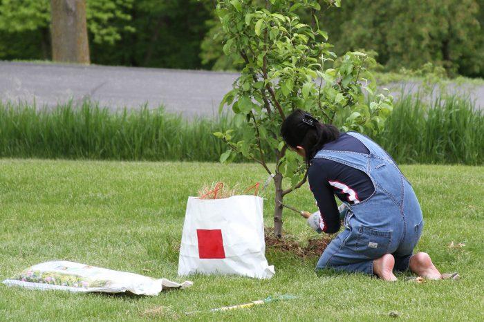 Подкормка молодых яблонь