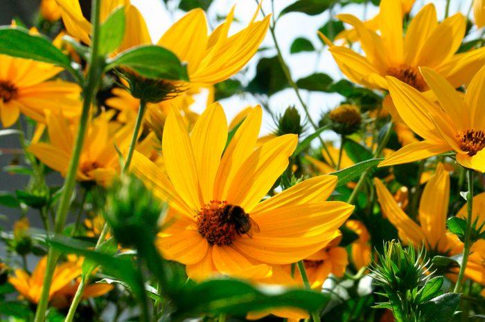 Цветы для украшения сада