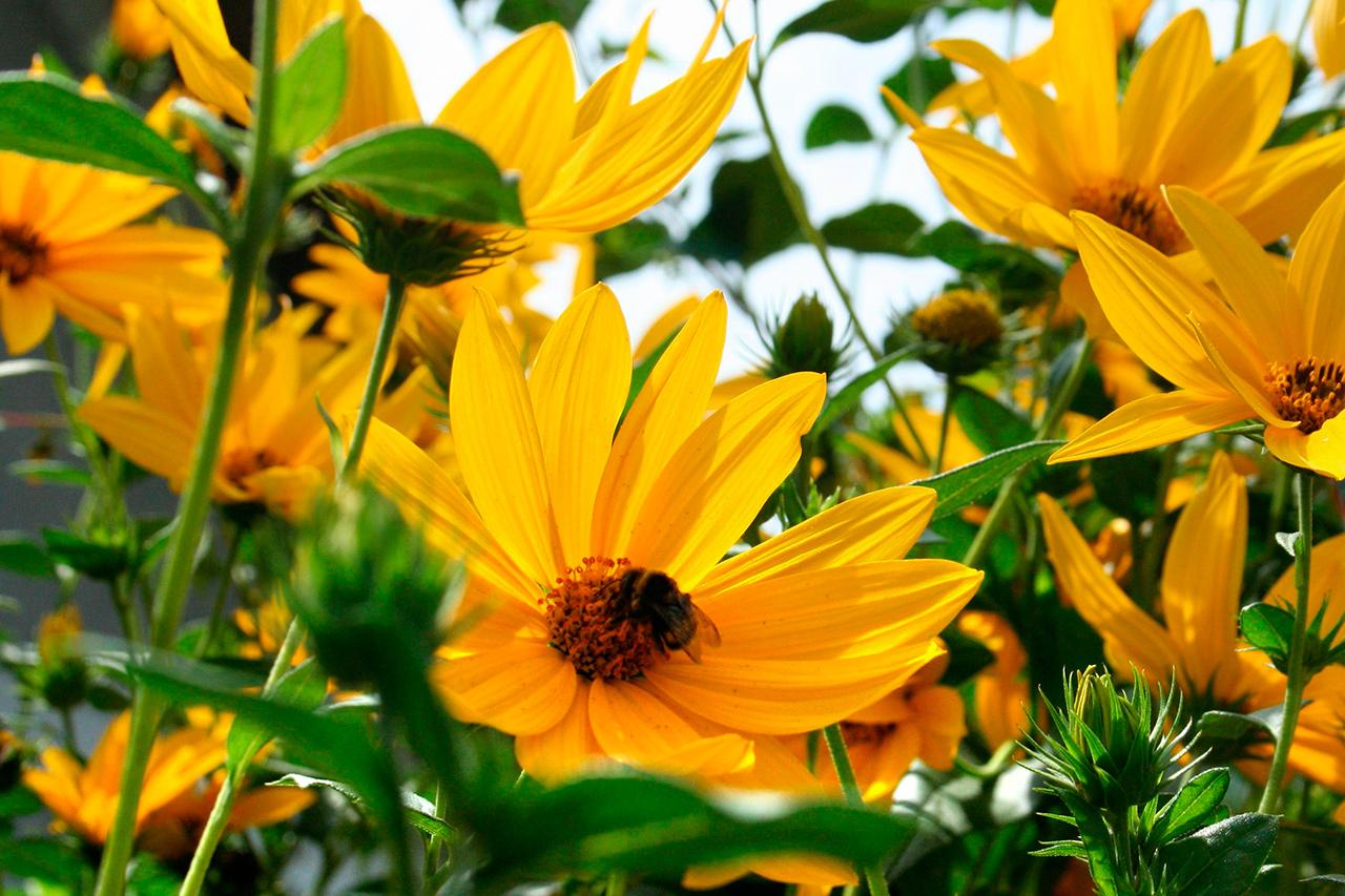 Цветочные растения для украшения сада
