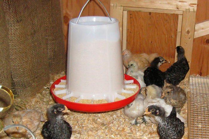 Кормушка для кормления маленьких цыплят
