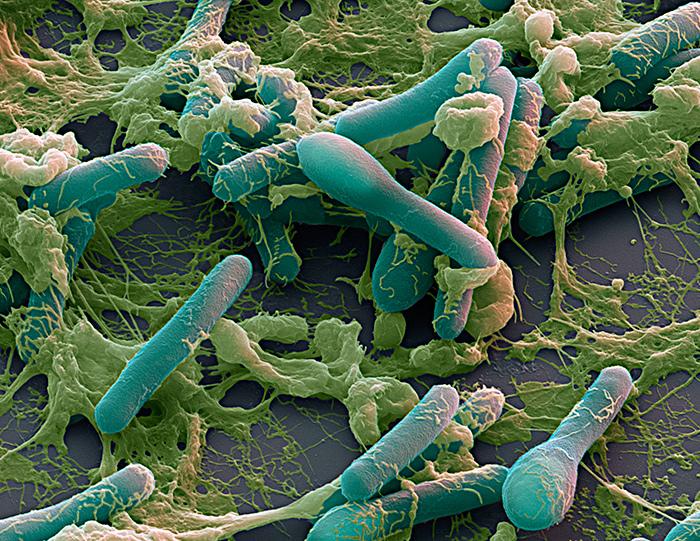 Ботулинические микробы