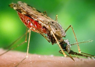 Средства против комаров
