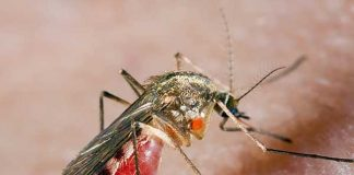 Комары средство борьбы