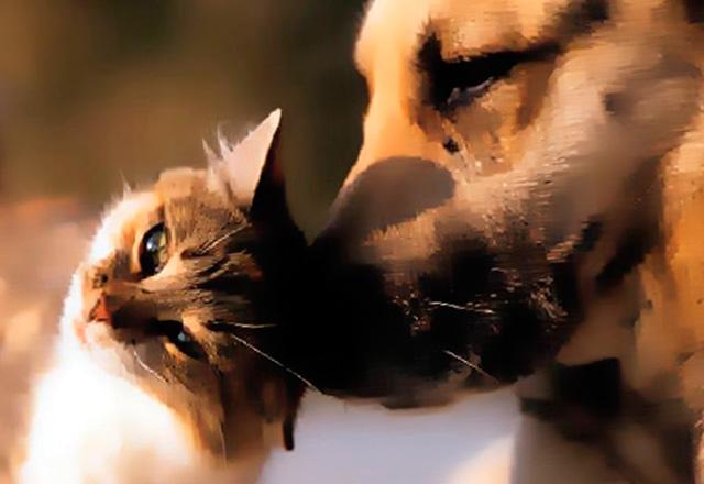 Кишечные заболевания у собак и кошек