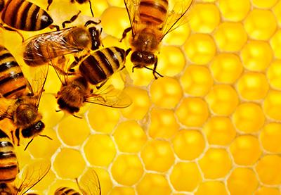 Натуральный мед от пчел
