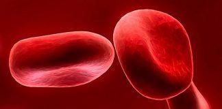 Кровь человека строение