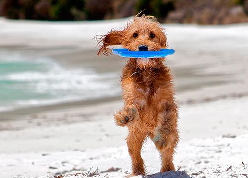 Интересные игры для пляжа