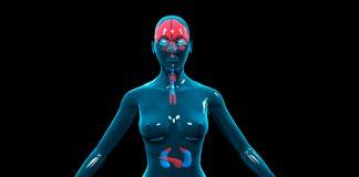 Эндокринная система женщины