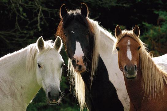 Лошади рассказ