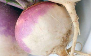Польза овоща репы для человека