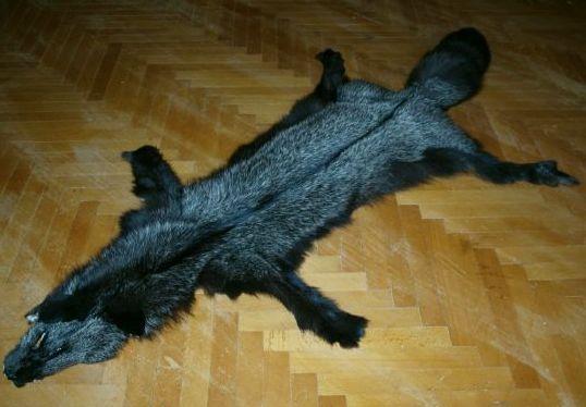 Окраска лисьей шкуры в черный цвет