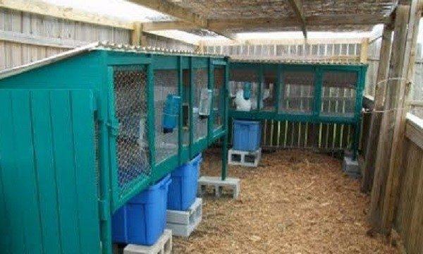Снизу кроличьи клетки оборудуются поддонами для сбора кала и мочи кроликов