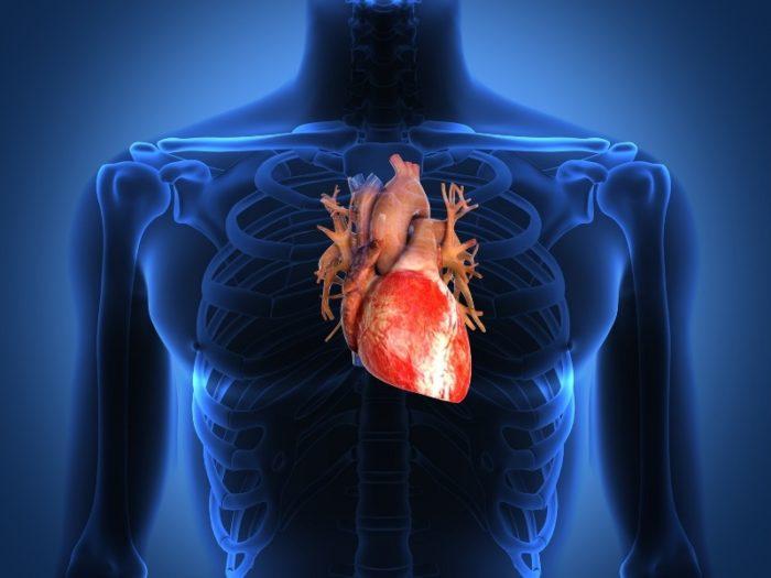 Боярышника при заболеваниях сердца