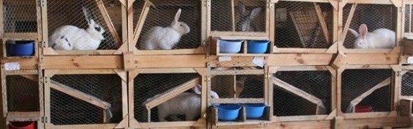 Клетки для кроликов можно размещать как в помещении, так и на улице