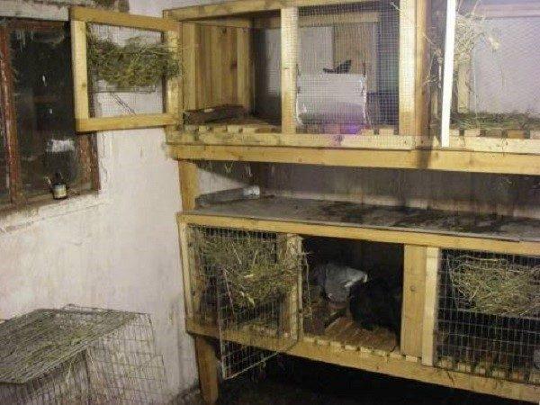 Помещение с клетками для кроликов должно быть чистым и оштукатуренным