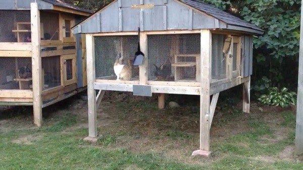Размещать клетки для кроликов необходимо на расстоянии от земли, чтобы уберечь питомцев от нападения грызунов
