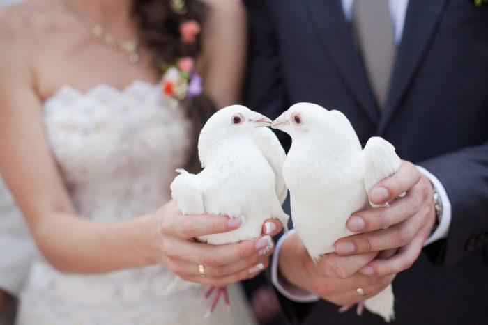 Сон выпускать голубей на свадьбе