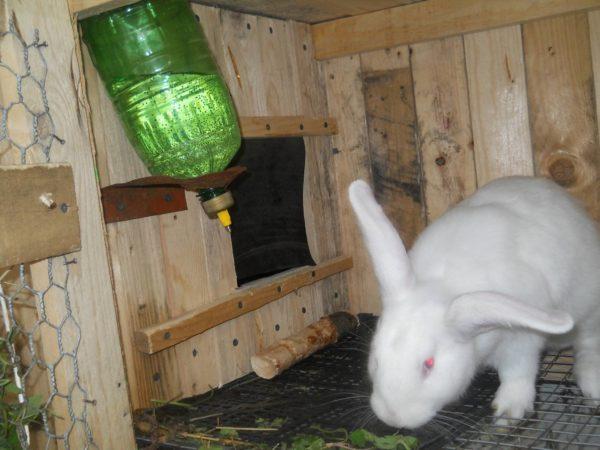 Кормушки и поилки для кроликов