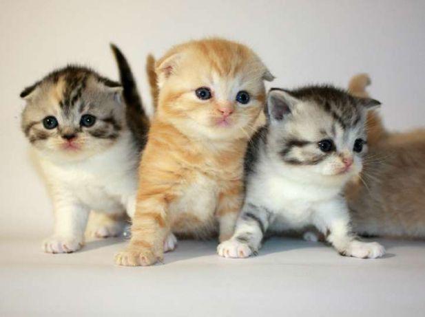 К чему снятся котята к чему снится маленький котенок