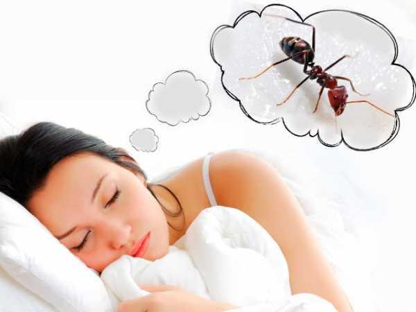 Сонник большие черные муравьи