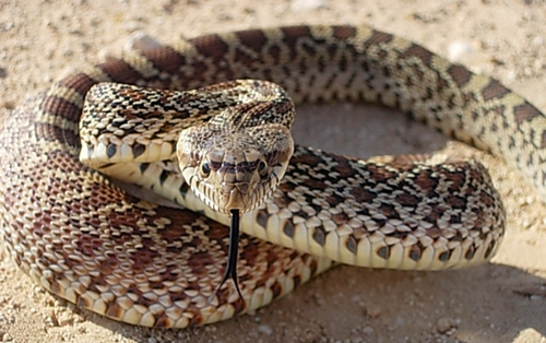 Сон змея