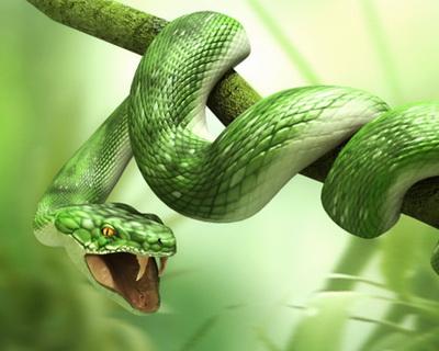 Зеленая змея сон