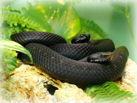 Сон - много змей