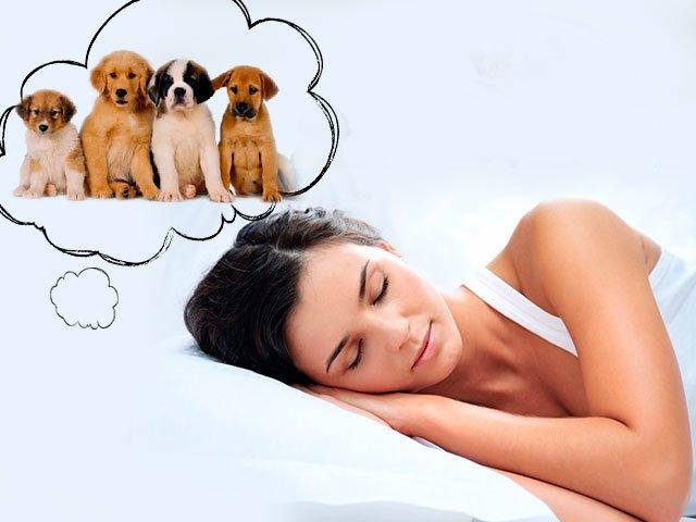 Сонник много щенков во сне к чему снится много щенков