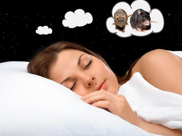 К чему снится крыса мужчине по соннику