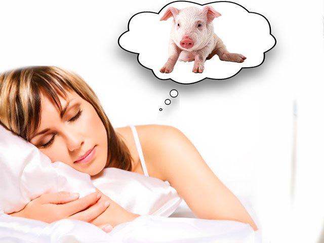 К чему снится свинья - снится свинья живая с поросятами сонник