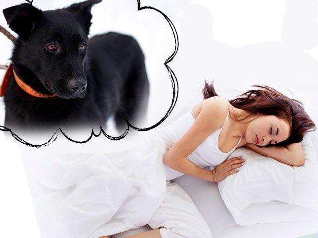 К чему снится во сне большая черная собака