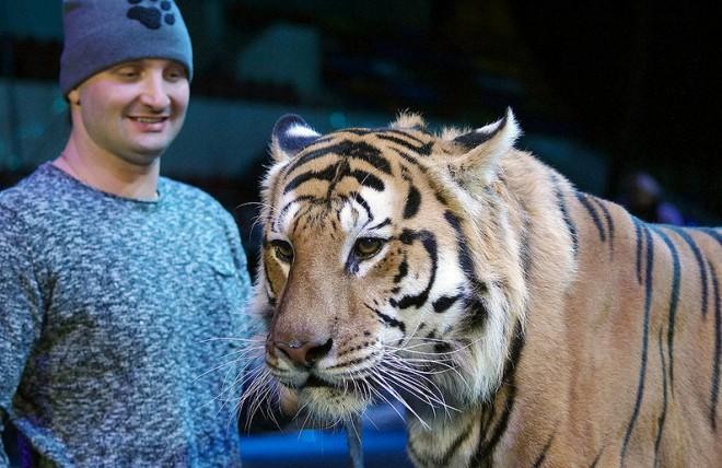 Эдгард Запашный и тигр Мартин