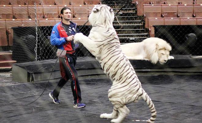 Эдгард Запашный во время репетиции в Большом московском цирке