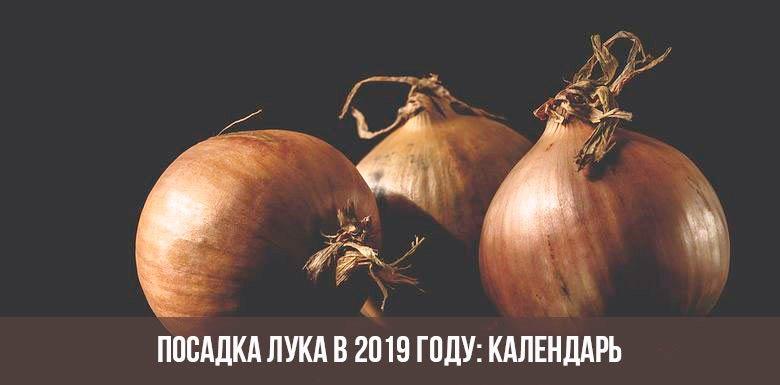 Как сажать лук и когда его сажать по Лунному календарю в 2019 году: посадка на рассаду и в открытый грунт лука всех видов
