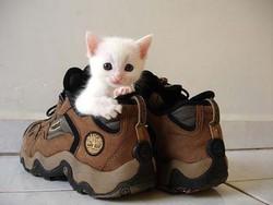 Кошка и обувь
