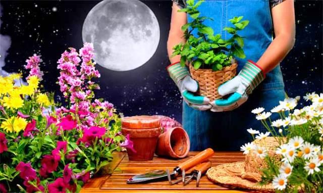 Лунный календарь цветовода на 2019 год посадка и пересадка цветов полив по месяцам