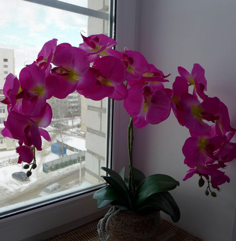 Фото Королевской орхидеи фаленопсис