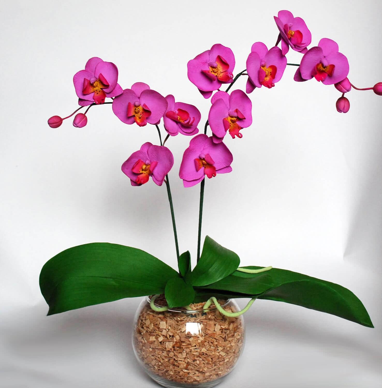 Фото фиолетовой орхидеи Фаленопсис в стеклянном вазоне